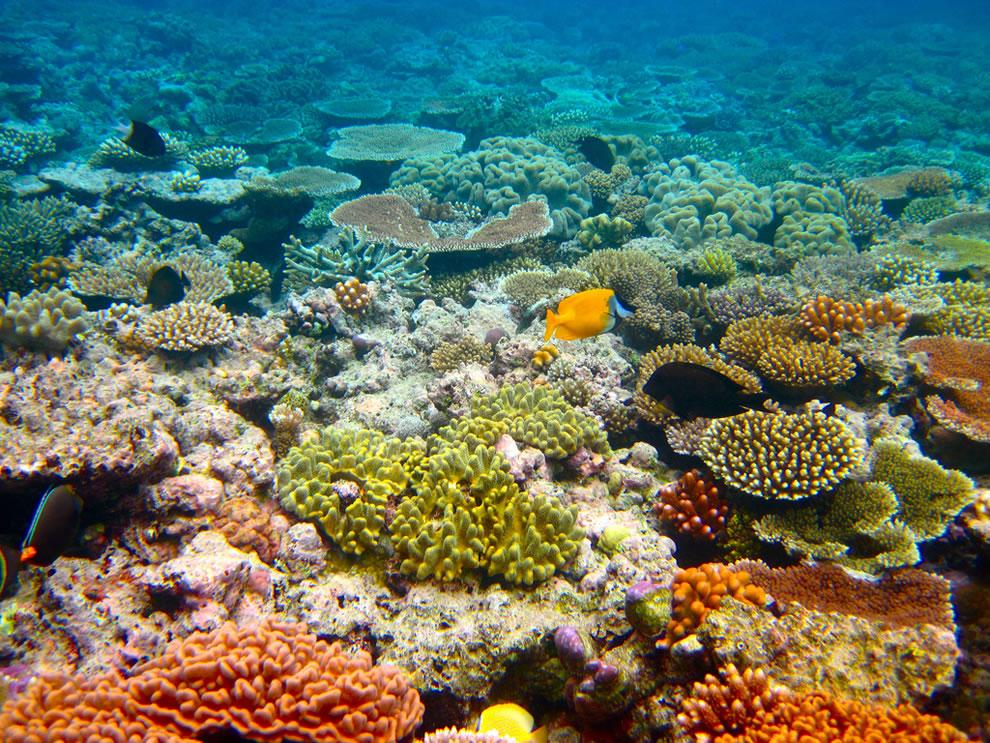 Great Barrier Reef – Dead or Alive?