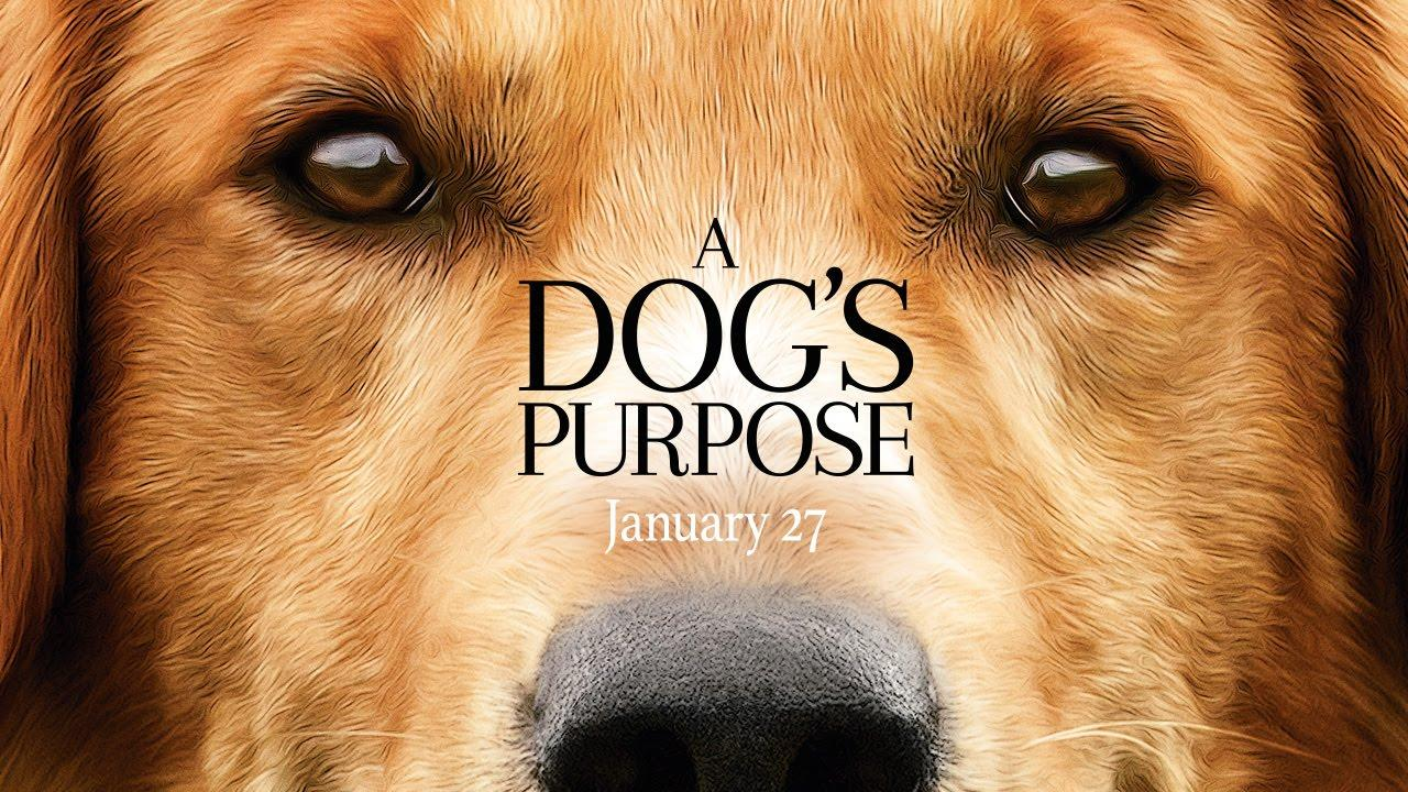 """""""A Dog's Purpose"""": Creating a Purpose for Animal Abuse in the Film Industry?"""