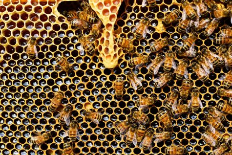 5 Reasons We Need to Save the Bees